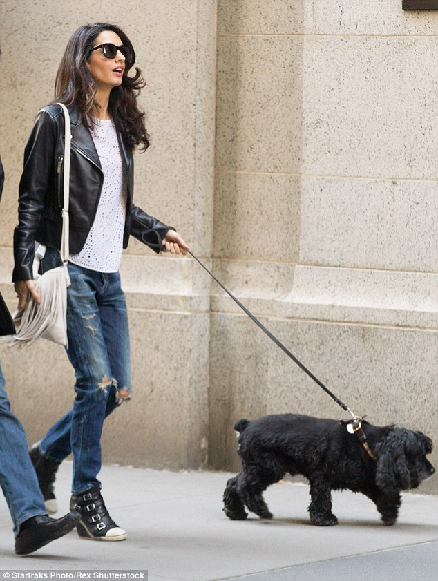 Amal and EINSTEIN!!! (and a blonde pooch) visit George on set, 4-12-15 277FD6A500000578-3036224-Heading_home_After_a_while_the_Brisih_Lebanese_lawyer_headed_off-a-6_1428881314534