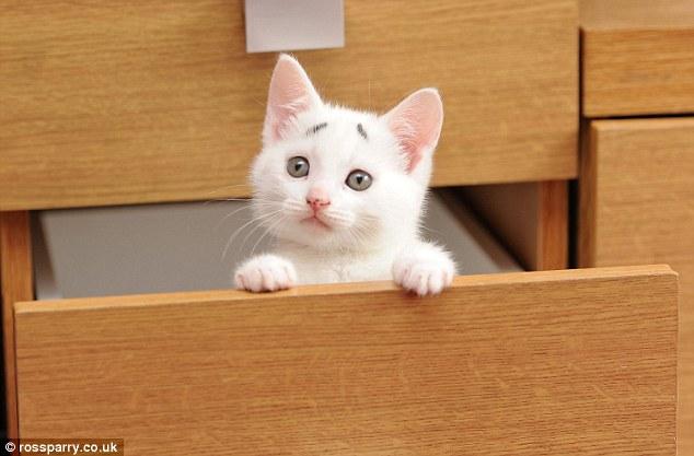 Et si nous étions des chats? - Page 2 28435E4E00000578-0-image-a-27_1430648631049
