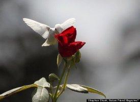Albino Hummingbird Photos Captured In Virginia Slide_206983_652623_small