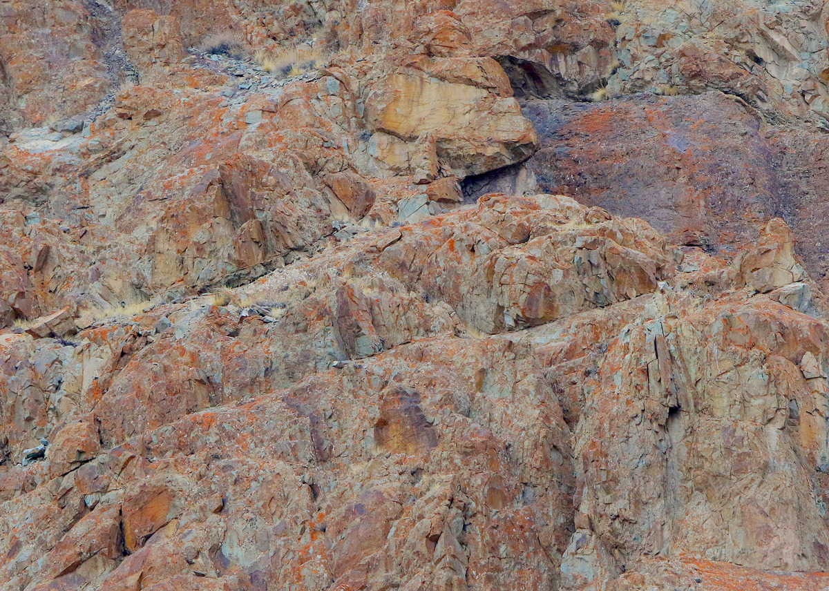Spot The Snow Leopard: Incredible Pictures Show Camouflaged Cat Stalking Its Prey Slide_442150_5847536_free