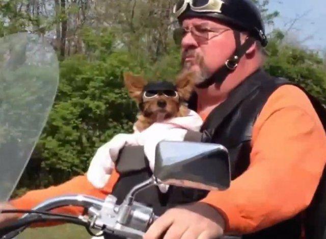 DOG'S & BIKES ATTITUDES - Page 3 A-MOTOS-ET-CHIENS-640x468