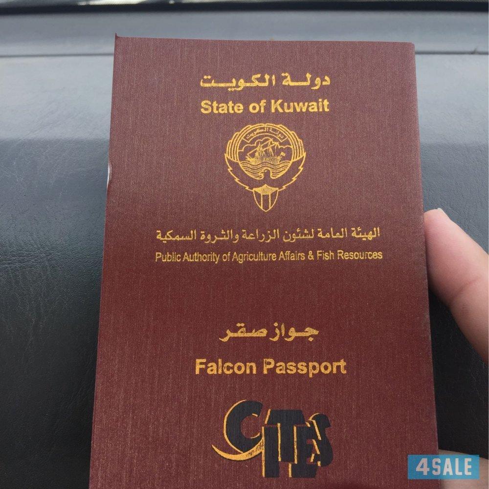 جوازات سفرها تُدخلها 160 دولة وثمنها آلاف الدولارات.. تعرَّف على أسرار تربية الصقور في الك Original
