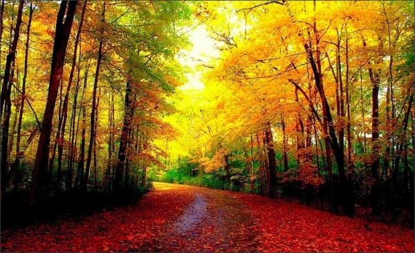 ... Y caen las hojas, llega ....¡¡¡ EL Otoño !!! 10c09c3b281bc909502a77ffb7c82ccc