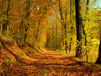 ... Y caen las hojas, llega ....¡¡¡ EL Otoño !!! 11e12f0e1812646affdcc3f4474da38e