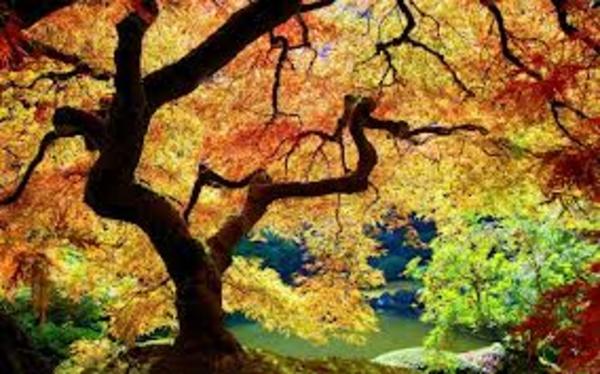 ... Y caen las hojas, llega ....¡¡¡ EL Otoño !!! Cf343d3362e0cd0b2cda09096811799b