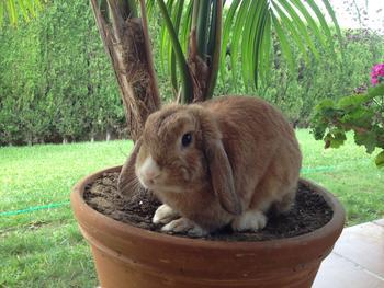 Baby Bunny está muy rebelde 2e1958c70450b7692a88adba49fb3c55