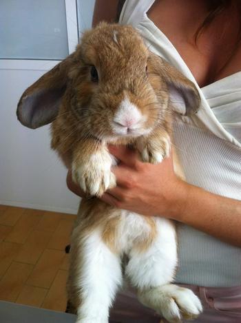 Baby Bunny está muy rebelde 346d9a4e46ddd27eab22166061b798b1