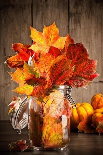 ... Y caen las hojas, llega ....¡¡¡ EL Otoño !!! - Página 8 B7f01229416f505c9ef99dabec0eabf5