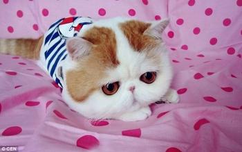 ana un nuevo gato... bizco 1ca2ad0d9c98d00303cdce24c5b6afe5