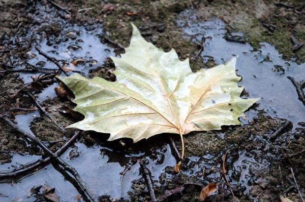 ... Y caen las hojas, llega ....¡¡¡ EL Otoño !!! - Página 10 524a129df89fa94b85cd735d7eb26517