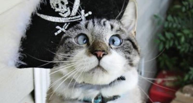 ana un nuevo gato... bizco E1553dc2e1e857c7c15ee5d584d5d1b1