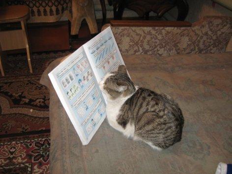 Как вставить и уменьшить фотографии через piccy.info 2_marta_2012g_001_500