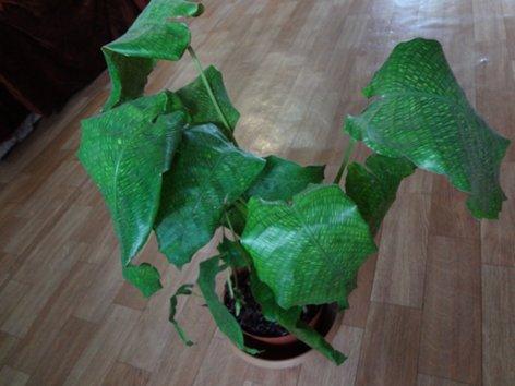 продам излишки растений DSC00436_500