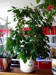 продам излишки растений Roytsyssus