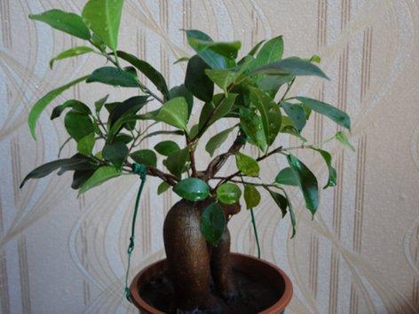 продам излишки растений DSC00278_500
