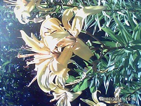 Дачные красоты - Страница 14 DSC_0000072_500