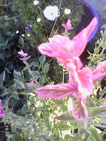 Дачные красоты - Страница 14 DSC_0000075_500