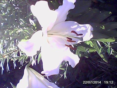 Дачные красоты - Страница 14 DSC_0000071_500