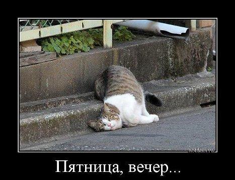 Зашел на форум - поздоровайся со всеми))) - Страница 2 GetImage_1__500