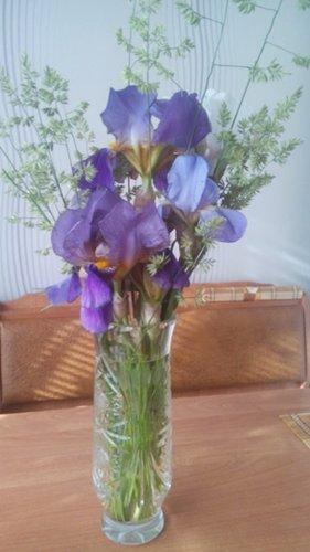 И у цветов весна)) DSC_0853_500