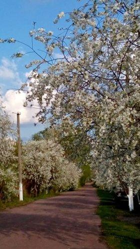 И у цветов весна)) DSC_0822_500