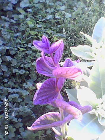 Дачные красоты - Страница 14 DSC_0000074_500