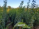 Vocne sadnice za jesen 2021 DDha9