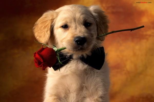 14 de febrero, San Valentín, día de los enamorados 12d