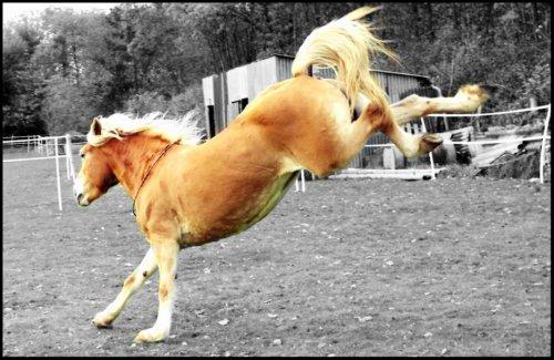les chevaux.. - Page 14 3146679786_1_6_9urE9b4N