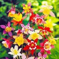 Fleurs  - Page 2 3114567463_1_3_VXK4ubh7