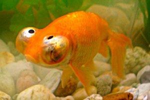 [Tutoriel] aquariophilie et loi française 3071757599_1_15_PDnZ5ff5