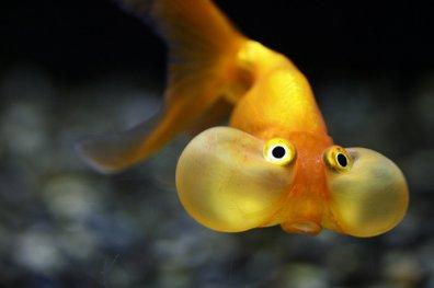 [Tutoriel] aquariophilie et loi française 3071757599_1_17_TlFq6SQi
