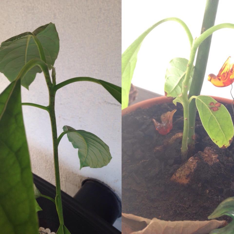 planting plants WMQ7n