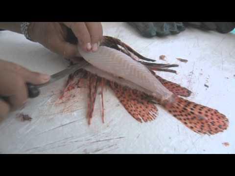 42 tipos de carnes de filete de pescados clase gourmet en imágenes Hqdefault
