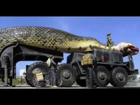 بالفيديو : جيش يحارب اكبر ثعبان فى العالم Hqdefault
