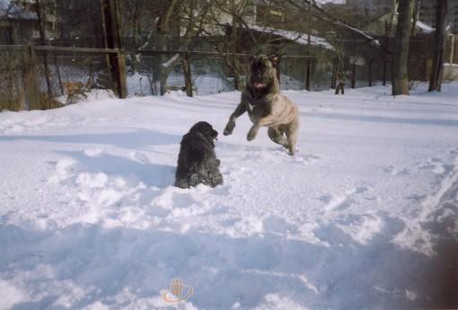 Наши собаки, друзья и гости, кот Мензурка - Страница 33 Ll_11503350
