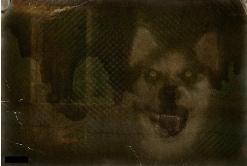 Smile Dog Dog Jpg Creepypasta Original