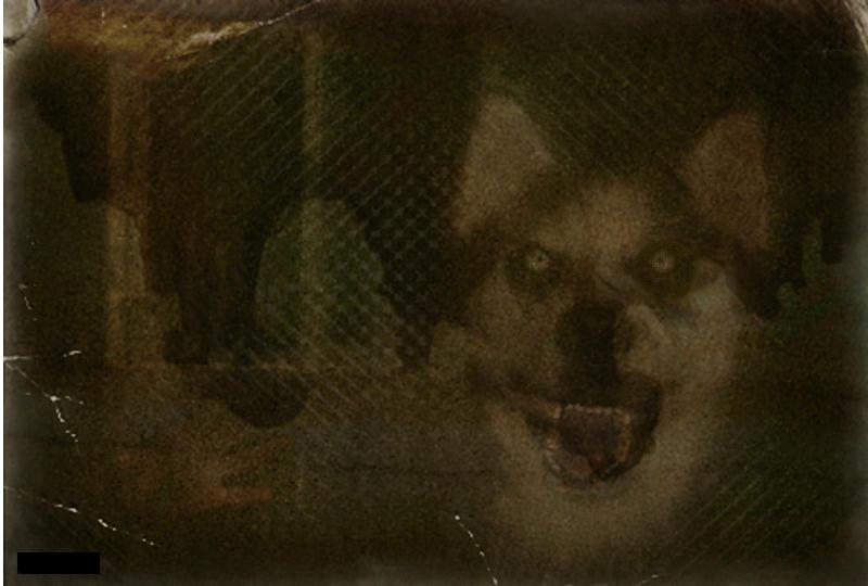 Smile Dog Dog Jpg Creepypasta Original