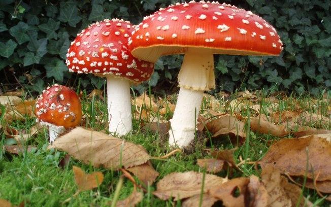 A Rainha britãnica e o seu criado de quarto apanhados com cogumelos alucinógenos Cxql2cldkkp31xlzs74xt7nb4
