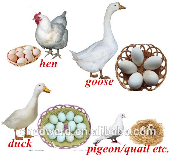 بيض الاوز Assembled_Poultry_Incubator_Machine_8448_Bird_Eggs