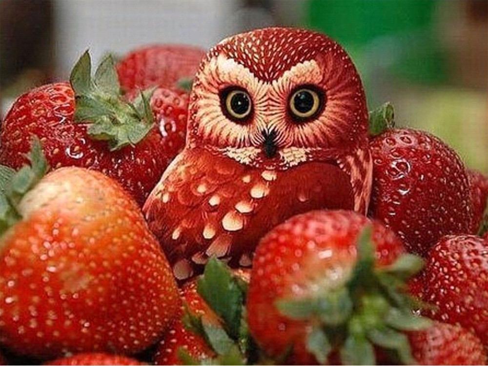 Voćne skulpture - Page 3 The-owl-30-x40-font-b-strawberries-b-font-The-new-style-DIY-Diamond-Painting-Diamond