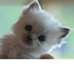 Šta biste poklonili osobi iznad? - Page 2 Cat22