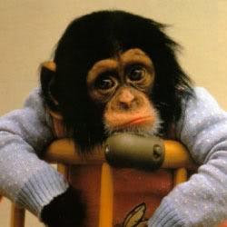 Animals - Page 2 Monkey1