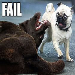 Fail! DoggyFAIL1
