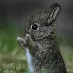 Da o nota pozei Bunny1