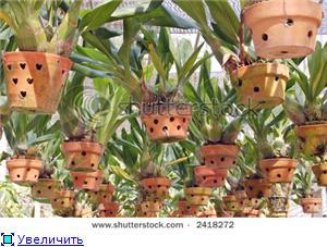 Горшки для орхидей 5dfc8ad17387t