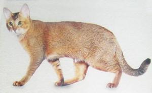 Необычные и редкие породы кошек и собак 2b56ee1a2f39