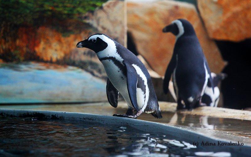 Швейцарский зоопарк 1f8850f5a3b9