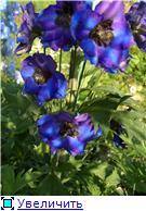 Лето в наших садах - Страница 4 365a0d4700a6t