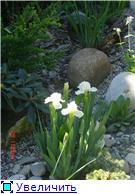 Растения для альпийской горки. - Страница 2 987cb4ff089dt
